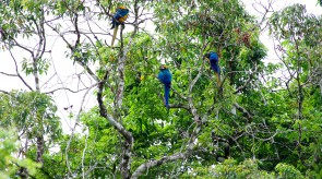 20150706_Blue_and_Yellow_Macaw_3.jpg